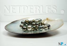 perles de tahiti haut de gamme